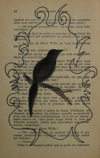 oiseaunoir