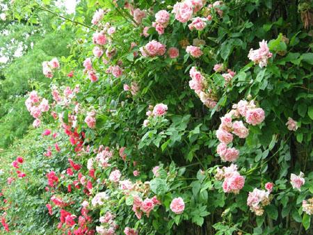 jardin_de_bagatelle8