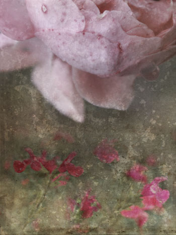 fleurs_hiver3