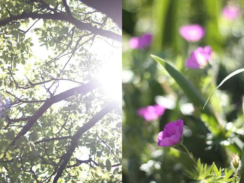 printemps_cerises3