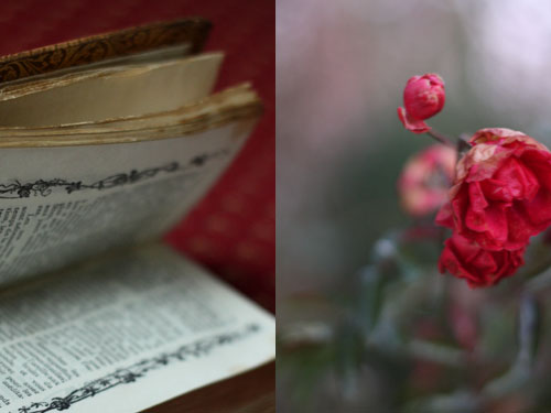 Roses_rouges