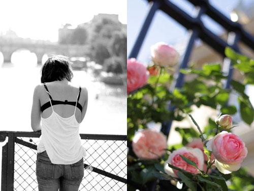 Roses_roses