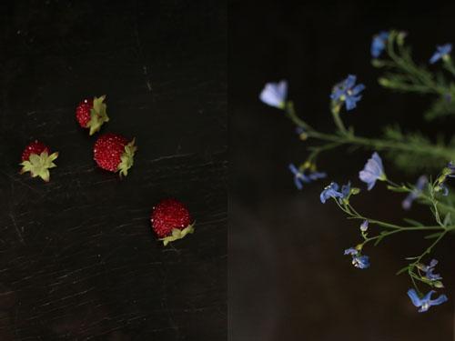 Fleurs_de_lin