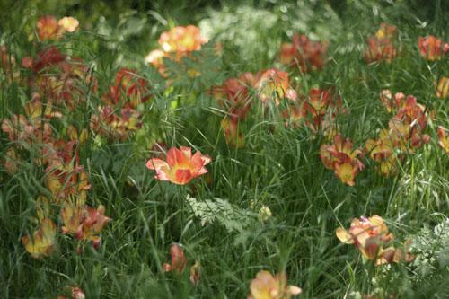 Grandes_herbes