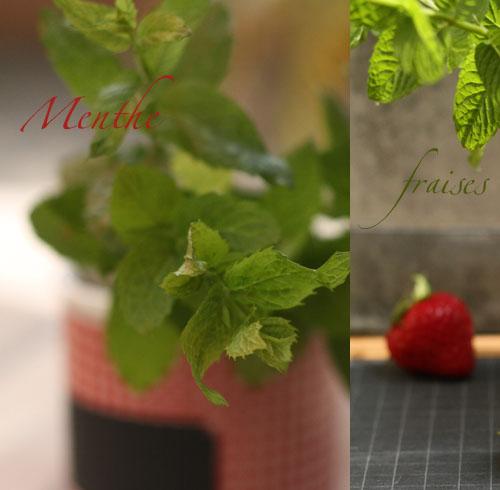 Menthe_fraises