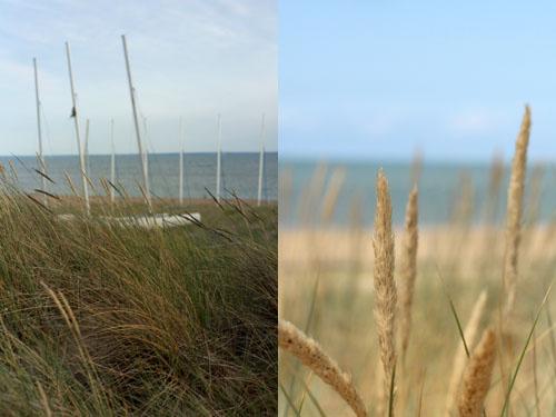 Dans_les_dunes