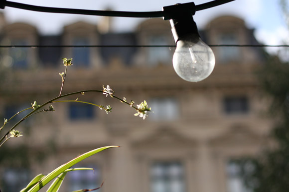 Les lumières du Marché aux Fleurs