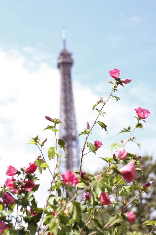 Tour Eiffel dans un bouquet de fleurs