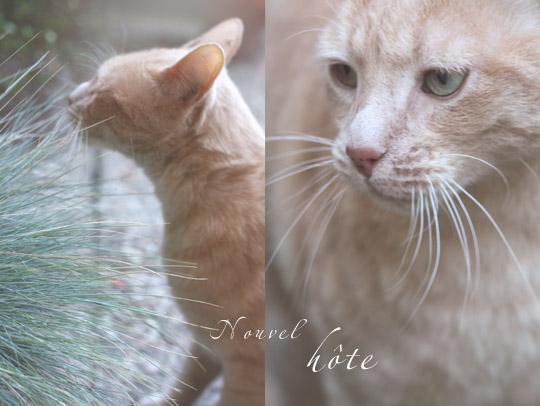 Visite d'un chat beige
