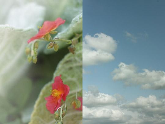 Cure de fleurs