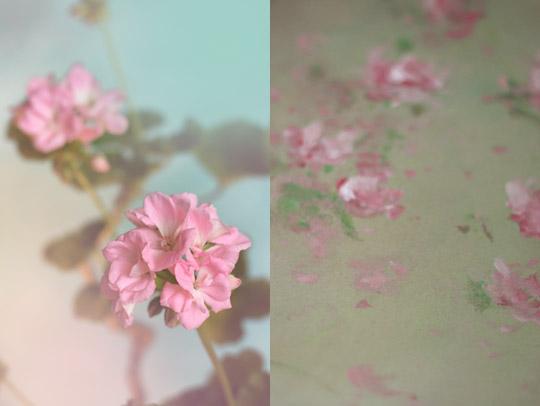 Période florale