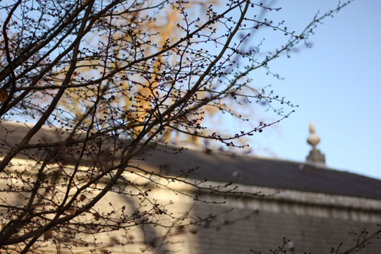 Vue sur les toits