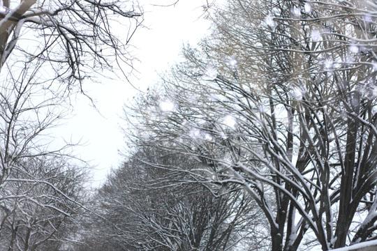 Les arbres du Père Lachaise sous la neige