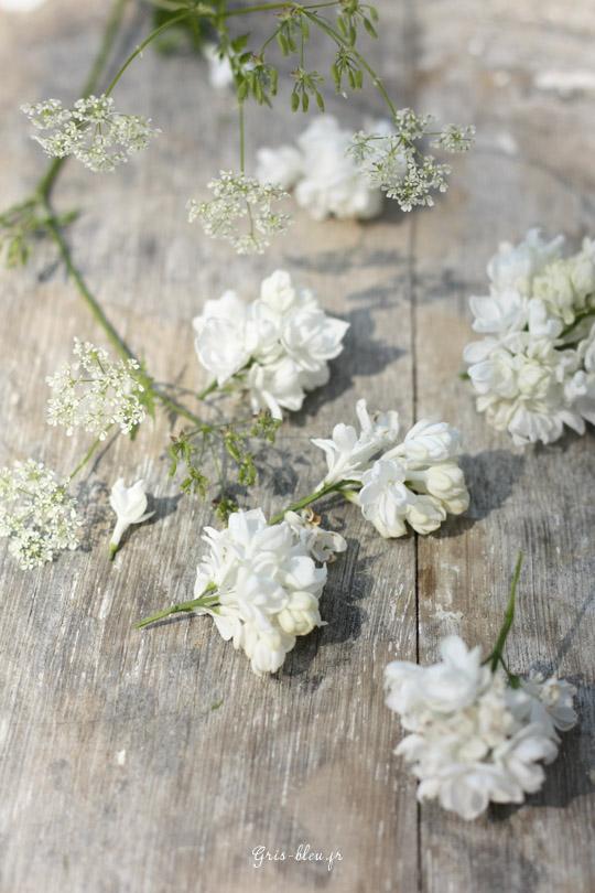 Carottes sauvages et fleurs de lilas