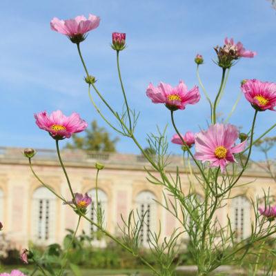 Dans le silence du Grand Trianon