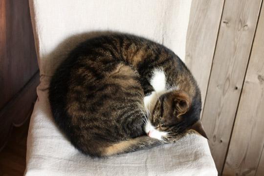 Nouveau foyer pour le chat abandonné