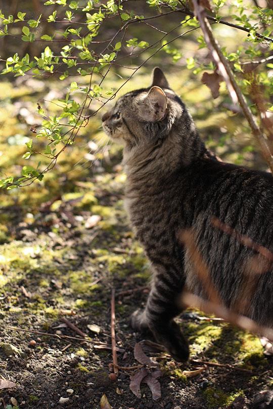 Le chat joueur