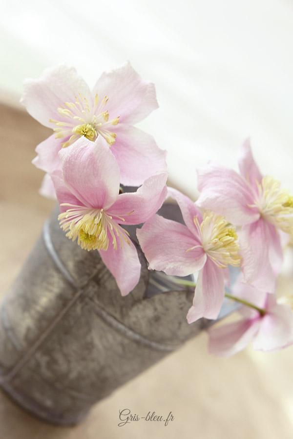 Fleurs de Montana Mayleen