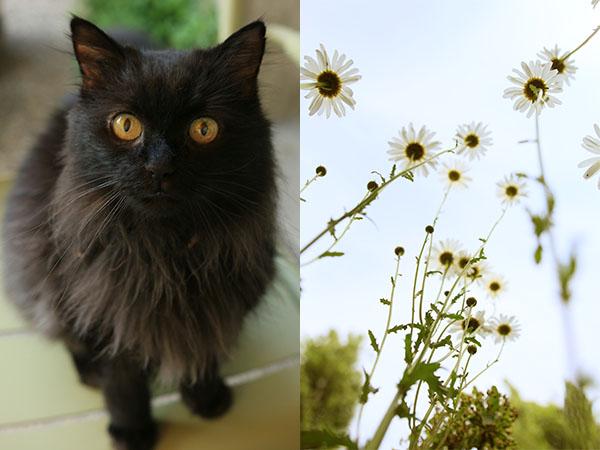 Vieux chat noir