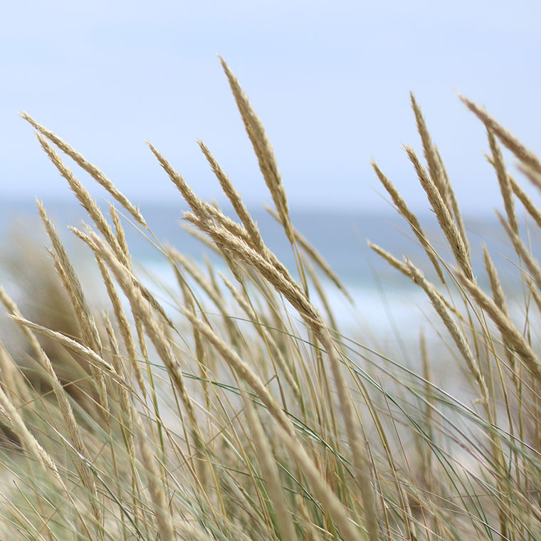 Dunes venteuses