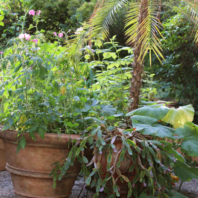 La jungle de la terrasse