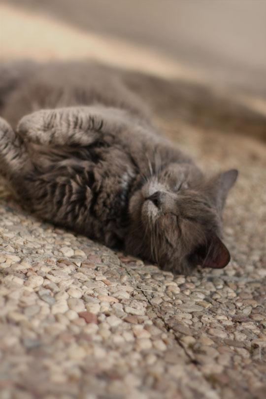 Repos du chat